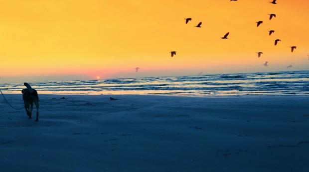 beach_reya