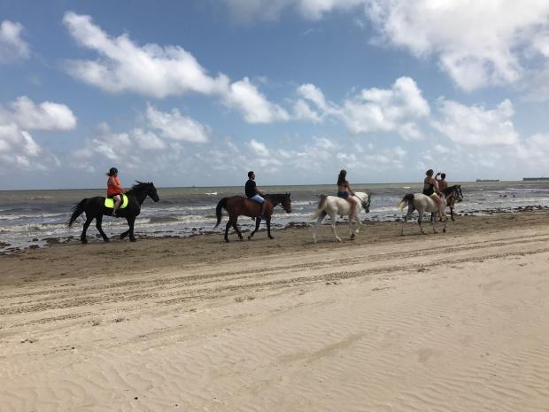 Horse Weekend 2017 (8)